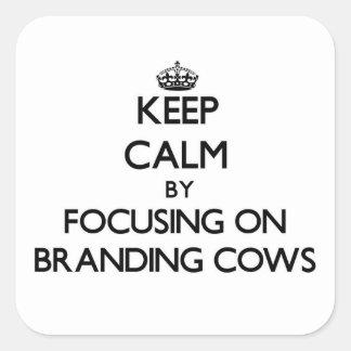 Mantenha a calma focalizando em vacas de marcagem