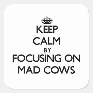 Mantenha a calma focalizando em vacas loucas adesivos quadrados