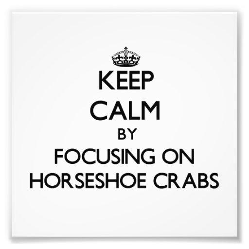 Mantenha a calma focalizando nos caranguejos em fe fotos
