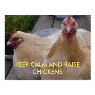 Mantenha cartão calmo e do aumento das galinhas cartão postal