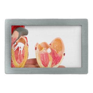 Mão com modelo humano do coração em background.jp