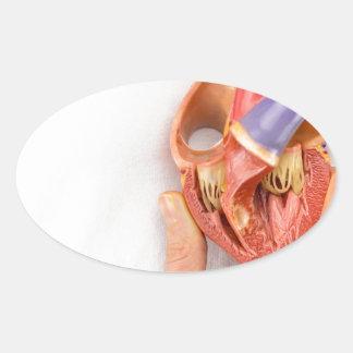 Mão que guardara o modelo do coração na frente da adesivo oval