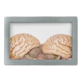 Mãos que guardaram o cérebro humano modelo no
