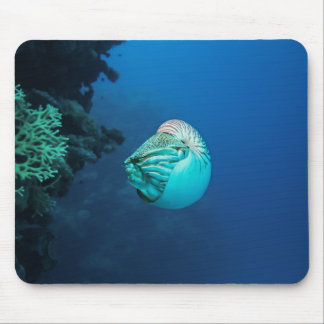 Mar coral do grande recife de coral do nautilus mouse pad