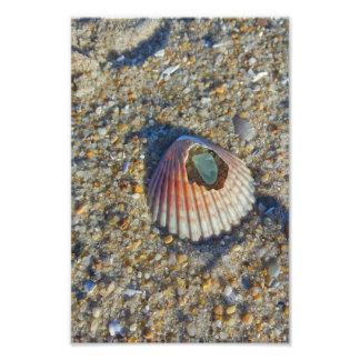 Mar Shell com vidro Impressão De Foto