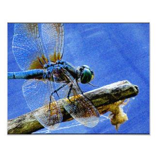 Maravilha da libélula impressão de foto
