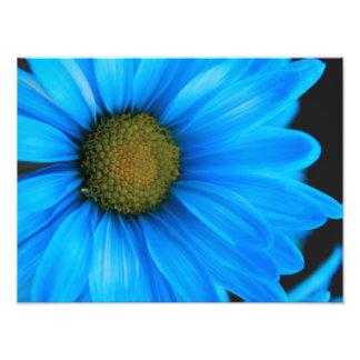 Margarida azul brilhante impressão de foto