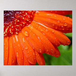 Margarida chuvosa pôster