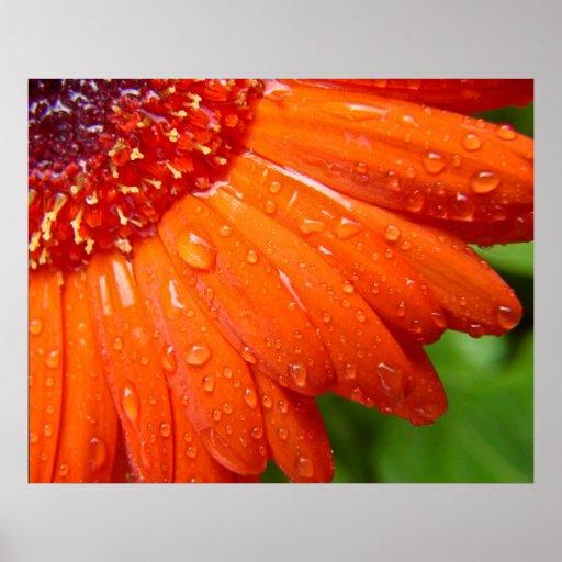 Margarida chuvosa pôsteres