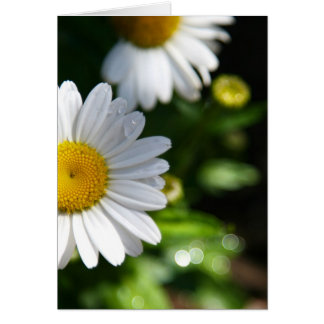 Margarida, flor, gotas, cartão vazio