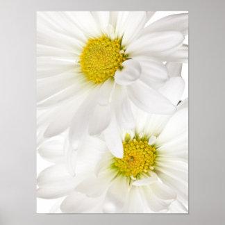 Margaridas brancas - modelo personalizado da flor pôster