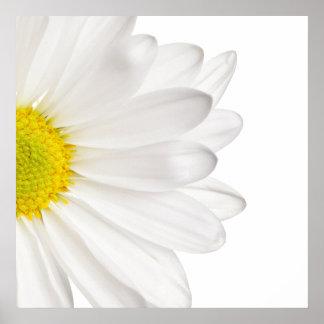 Margaridas personalizadas fundo da flor da pôster