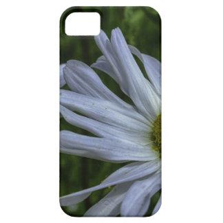 margaridas selvagens capas para iPhone 5