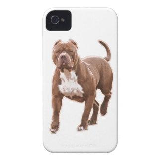 Marrom do pitbull capas para iPhone 4 Case-Mate