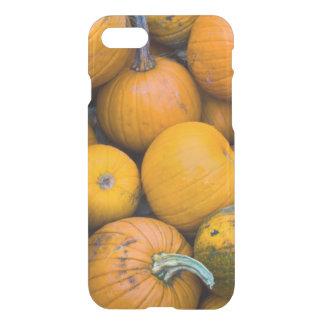 Massachusetts, Salisbúria, abóboras, outono Capa iPhone 7