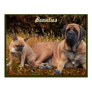 Mastim com bulldog francês cartão postal