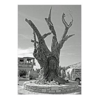 Matala. Uma árvore na memória dos hippies. Foto