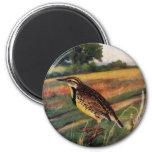 Meadowlarks em um campo gramíneo imas de geladeira