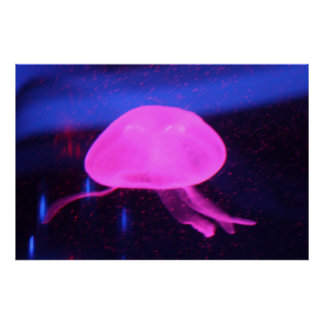 Medusa fluorescentes cor-de-rosa pôster