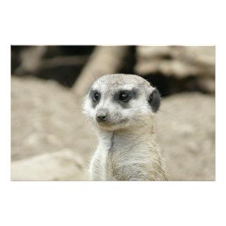 Meerkat Arte De Fotos