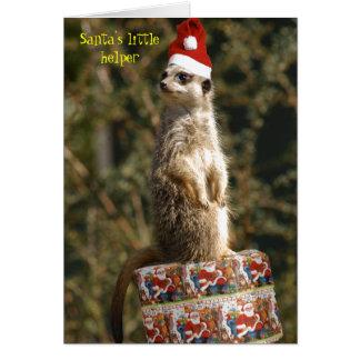 Meerkat, cartão pequeno do ajudante do papai noel