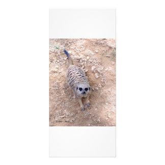 Meerkat contra a argila que olha acima a fotografi 10.16 x 22.86cm panfleto