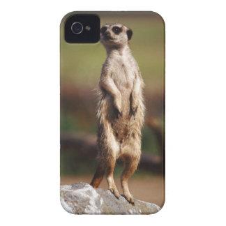 meerkat delgado-atado capa para iPhone 4 Case-Mate