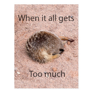 Meerkat engraçado cartão postal