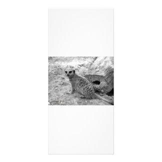 Meerkat que olha a imagem do photogarph do visor 10.16 x 22.86cm panfleto