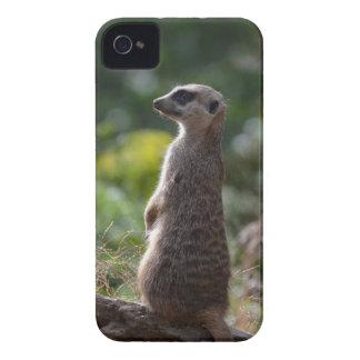 Meerkat selvagem capa para iPhone 4 Case-Mate