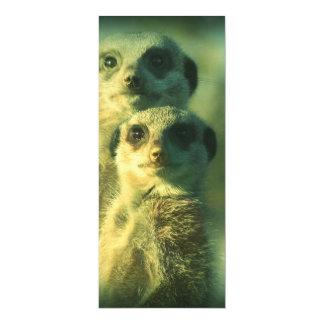 Meerkats engraçados convites personalizado