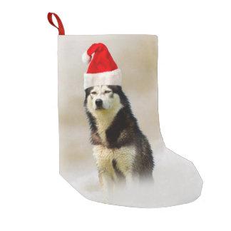Meia De Natal Pequena Cão do rouco Siberian com o chapéu do papai noel