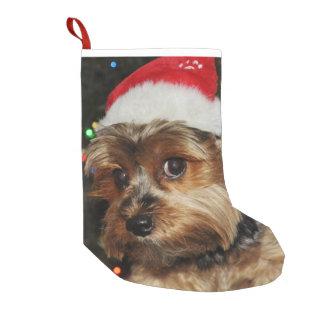 Meia De Natal Pequena Yorkshire terrier bonito com chapéu do papai noel