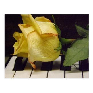 Melodia de um cartão do rosa