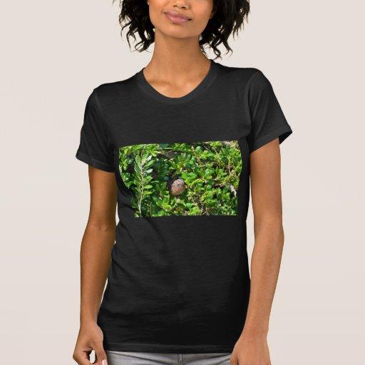 Melro em um arbusto do louro tshirts