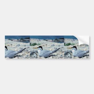 Menos andorinha-do-mar adesivo para carro
