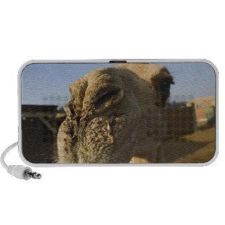 Mercado do camelo o Cairo Egipto Caixinha De Som De Viagem