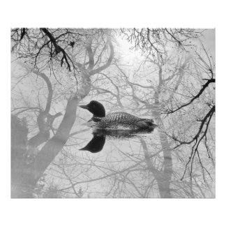 Mergulhão-do-norte preto e branco em um impressão foto