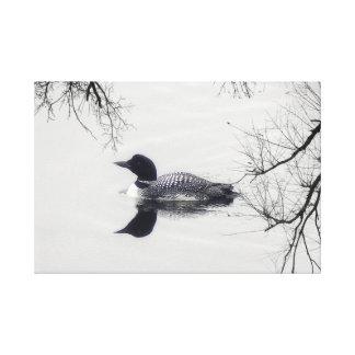 Mergulhão-do-norte preto e branco em umas canvas