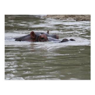 MERGULHO do MERGULHO do MERGULHO do Hippopotamus - Cartão Postal