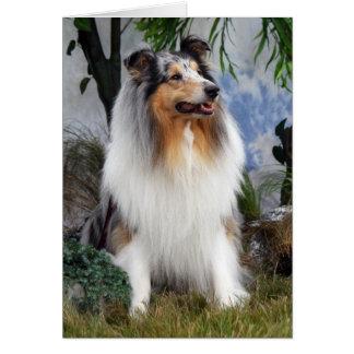 Merle azul do cão áspero do Collie, cartão vazio