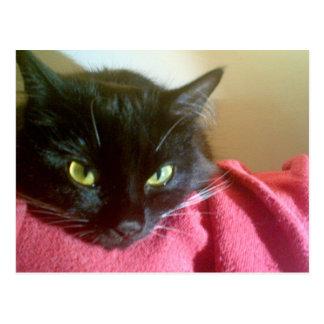 Merlin o cartão do gato