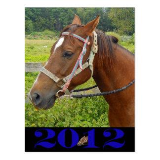 Meu cartão do cavalo