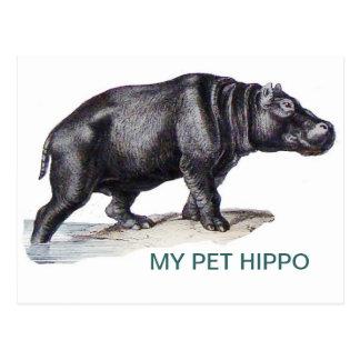MEU HIPOPÓTAMO DO ANIMAL DE ESTIMAÇÃO CARTÃO POSTAL