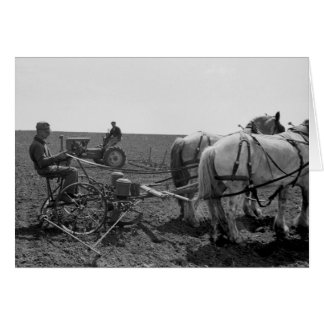 Milho puxado a cavalo Plantador 1940 Cartoes
