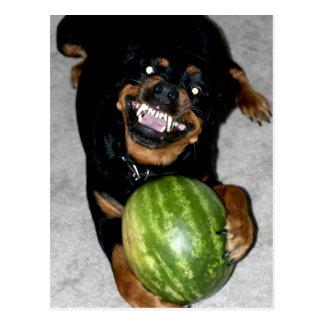 Minha espião do cão gosta de melancias cartão postal