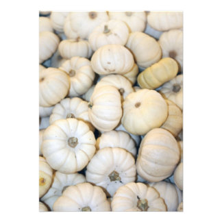 Mini abóboras brancas