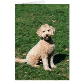 Mini cartão do filhote de cachorro de Goldendoodle