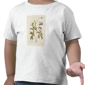 Miosótis Tshirts
