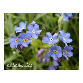 Miosótis, flor de estado de Alaska Cartões Postais